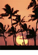 ハワイの伝統的なマッサージ